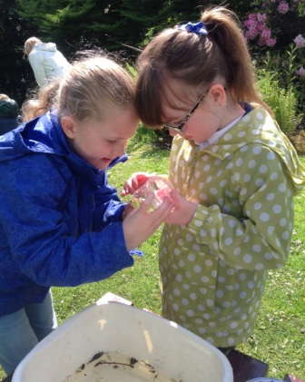 Pond Dipping comp
